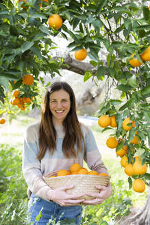 Smiling woman carrying oranges in wicker basket at organic farm - LVVF00033