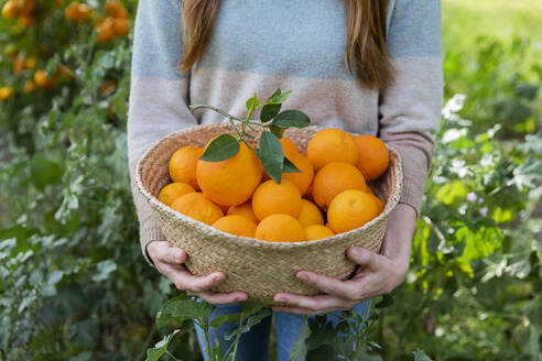 Close-up of woman carrying oranges in wicker basket while standing amidst plants at countryside - LVVF00036