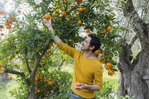 Smiling man picking oranges while standing in organic farm - LVVF00039