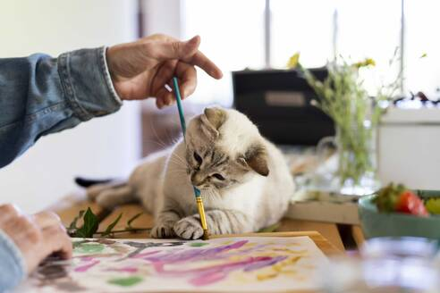 Cute cat holding paintbrush in mouth with senior man at home - AFVF06503
