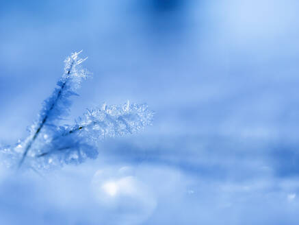 Small ice crystals - BSTF00179