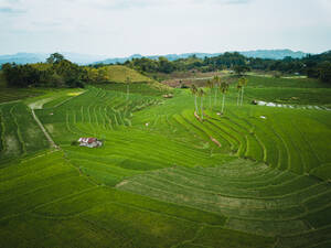 Aerial view of rice fields in Guindulman, Bohol, Philippines - AAEF08850
