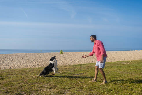 Bearded man playing with dog at beach in sunny day - CAVF84994