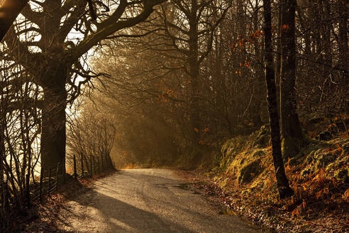 Small road in the early morning light at the British Lake district - CAVF85318