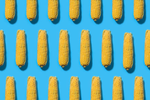 Pattern of corns against blue background - FLMF00245