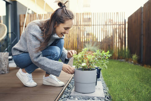 Smiling young woman looking at potted plant in garden - BSZF01568