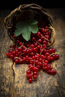 Ripe red currant berries spilling from small wicker basket - LVF08935