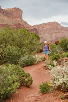 Woman hiker in shorts and a tank top walks amongst desert shrubbery - CAVF85870