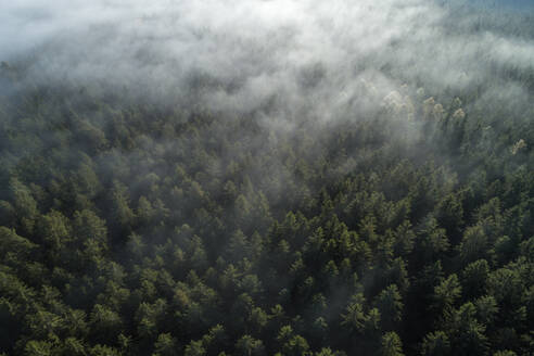 Germany, Baden-Wurttemberg, Drone view of autumn forest shrouded in morning fog - RUEF02991