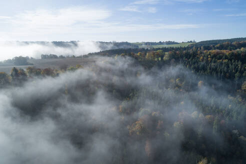 Germany, Baden-Wurttemberg, Drone view of autumn forest shrouded in morning fog - RUEF02994