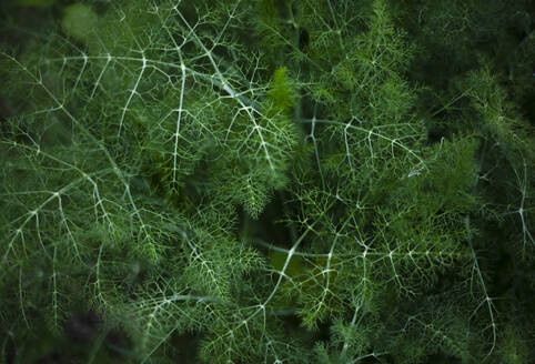 Closeup�from above view of green lush grass growing in dark forest - ADSF00009