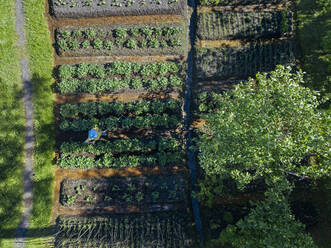 Aerial view of female worker at strawberry field, Tikhvin, Russia - KNTF04739
