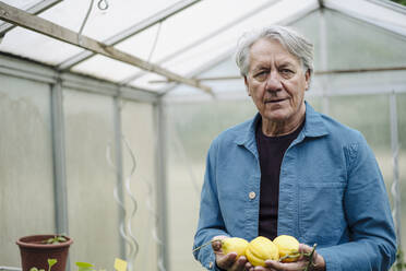 Portrait of a senior man holding organic lemons at a greenhouse - GUSF04165