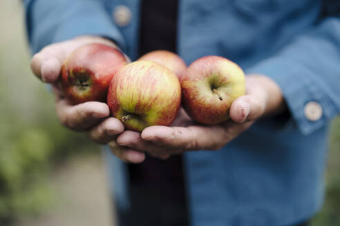 Close-up of man holding organic apples - GUSF04171