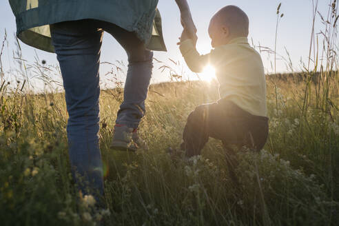 Russia, Moscow, little boy walking by his mother's hand in flower sunset field - EYAF01211