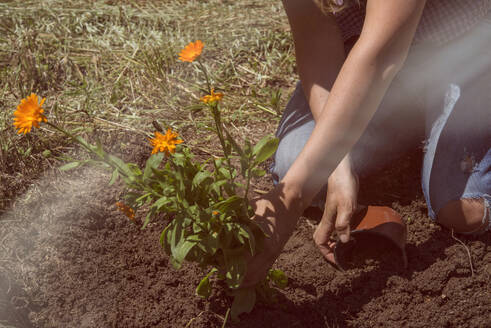 Woman planting flowers on land in garden during sunny day - SKCF00642