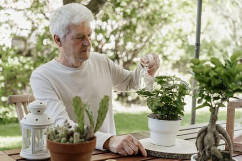 Senior man spraying house plants - AFVF06709