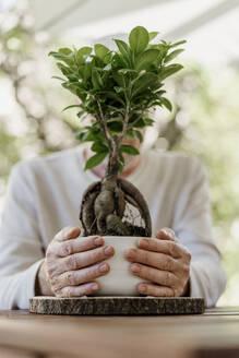 Senior man holding bonsai plant - AFVF06712