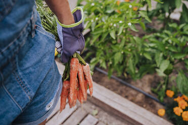 Close-up of mid adult woman holding carrots standing in community garden - EBBF00425