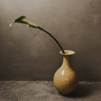 Close-up of leaf in vase on table against concrete wall at home - DSIF00057