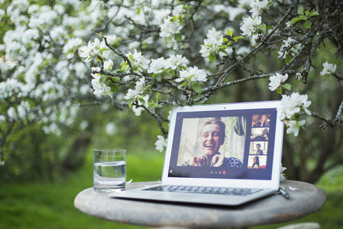 Friends video chatting on laptop screen below flowering tree in garden - CAIF28980