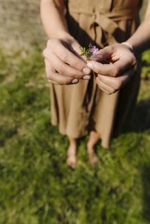 Close-up of woman holding flower on a meadow - GUSF04284
