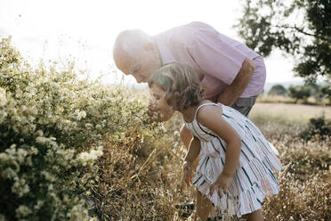 Senior man with granddaughter smelling flowers in field on sunny day - JRFF04659