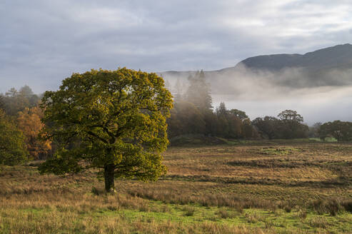 Autumn scene with early morning mist in autumn, Borrowdale, Lake District National Park, UNESCO World Heritage Site, Cumbria, England, United Kingdom, Europe - RHPLF16877