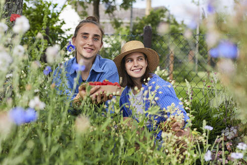 Young woman holding strawberries while working with friend in garden - UKOF00043