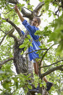 Young woman picking leaves while standing on tree in garden - UKOF00070