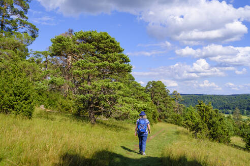 Frau wandert auf Altm�hltal-Panoramaweg im Naturschutzgebiet Gungoldinger Wacholderheide, Altm�hltal, Oberbayern, Bayern, Deutschland - SIEF09989