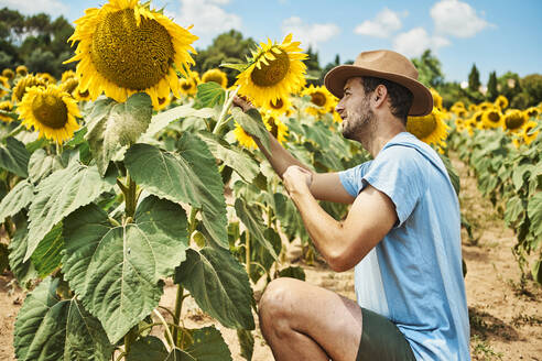 Man crouching and admiring sunflower in field during summer - VEGF02715
