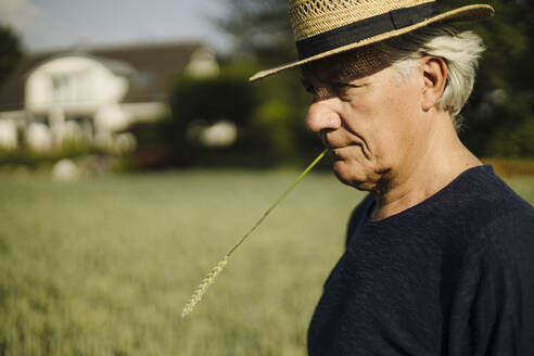 Wrinkled man holding crop in mouth while standing in field - GUSF04372