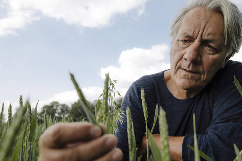 Wrinkled man looking at crop in agricultural field - GUSF04432