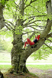 Woman resting on branch of beech tree in forest - ECPF01013