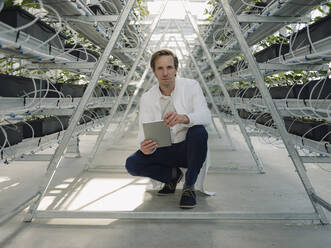 Portrait of a scientist holding tablet in a greenhouse - JOSEF01598