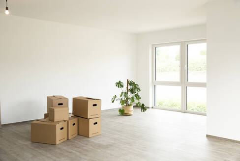 Cardboard boxes with monstera deliciosa on floor against white wall in new house - MJFKF00544