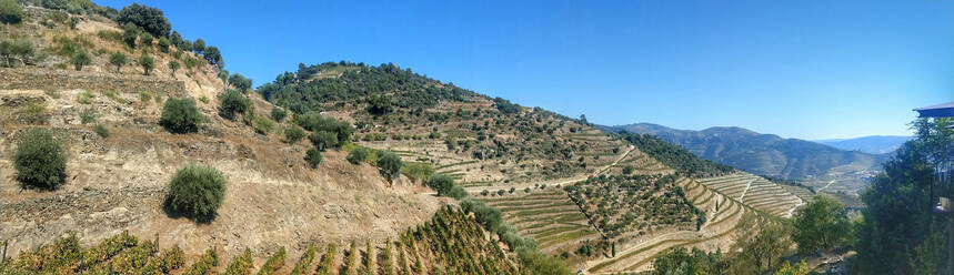 Panorama of hillside vineyards in summer - NGF00644