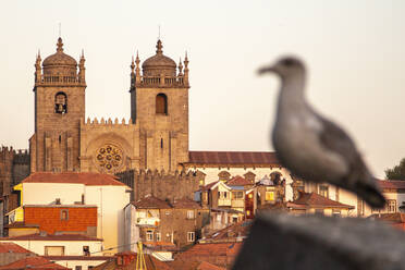 Portugal, Porto District, Porto, Porto Cathedral at dusk with dove perching in foreground - NGF00653