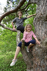 Smiling brother and sister sitting on branch of tree in forest - ECPF01021
