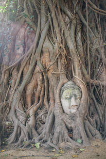 Ancient stone statue of Buddha overgrown with roots of tree in sunlight, Thailand - ADSF15280