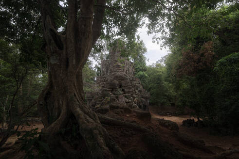 Low angle of wonderful scenery of aged Buddhist temple covered with huge tree roots and located in jungles in Cambodia - ADSF15394