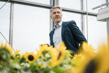 Thoughtful businessman standing amidst sunflowers in greenhouse - JOSEF01636