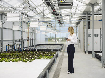 Businesswoman with digital tablet examining plants in greenhouse - JOSEF01648