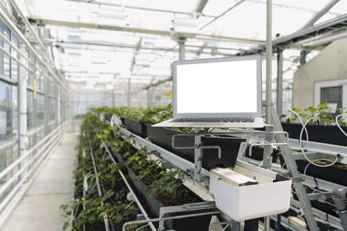 Laptop on rack against plants in greenhouse - JOSEF01720