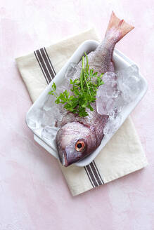 Top view of raw Pagrus major fish in plate with ice cubes and fresh parsley placed on table in cafe - ADSF15536
