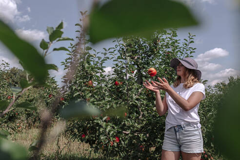 Woman wearing hat playing with apple while standing in orchard on sunny day - OGF00577