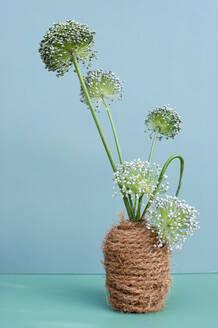 Allium flowers blooming in DIY vase wrapped in rope - GISF00658