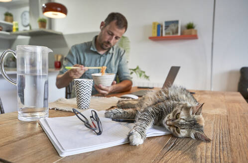 Cat lying on book while businessman eating noodles when working at home - VEGF02993