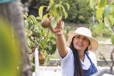Happy woman touching fresh pears at vegetable garden - FMOF01207